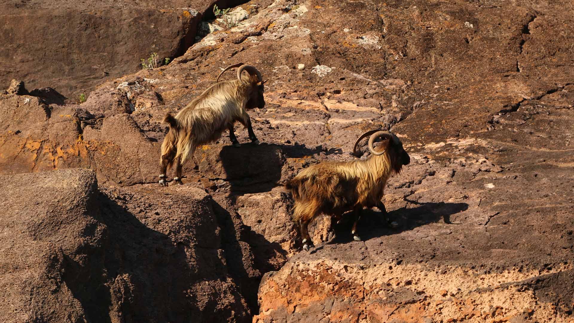 Visite de la réserve de Scandola